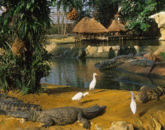 La Ferme aux Crocodiles - Pierrelatte